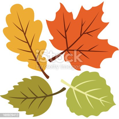 istock Vector illustration of four autumn leaves 165929412