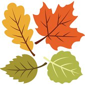 Vector illustration of four autumn leaves