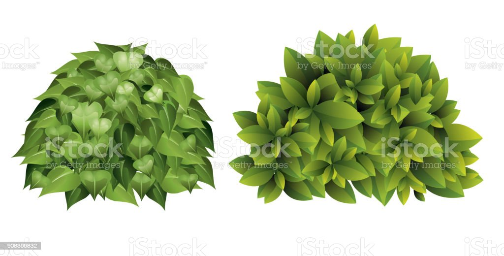 Vector Illustration Of Garden Bush With Green Leaves In Cartoon Style.  Royalty Free Vector