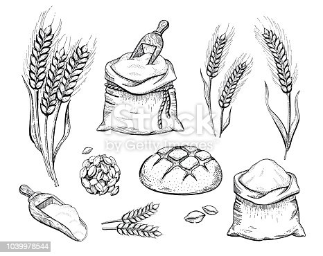 Vector illustration of hand draw bakery set: flour bag, bread, wheat ear, sketched concept. Black ink line art drawing isolated on white background. Organic food graphic. Engraving retro vintage icons