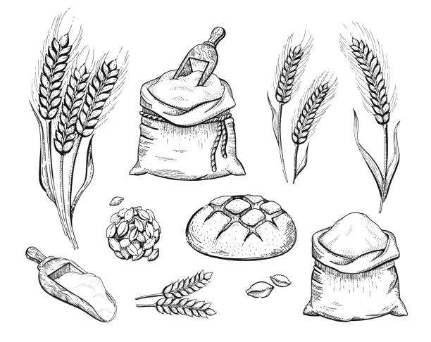 Vector illustration of hand draw bakery set flour bag, bread, wheat ear, sketched concept. Black ink line art drawing isolated on white background. Organic food graphic. Engraving retro vintage icons Vector illustration of hand draw bakery set: flour bag, bread, wheat ear, sketched concept. Black ink line art drawing isolated on white background. Organic food graphic. Engraving retro vintage icons bread clipart stock illustrations