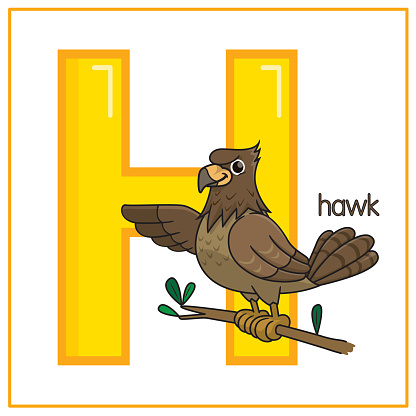 Vector illustration of Hawk isolated on a white background. With the capital letter H for use as a teaching and learning media for children to recognize English letters Or for children to learn to write letters Used to learn at home and school.