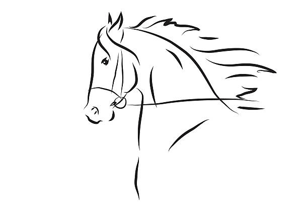 Vector Illustration Of Horse Head Art