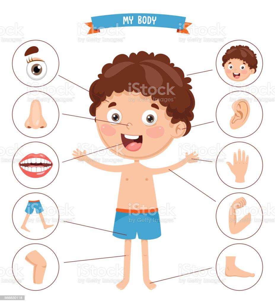 人間の体のベクトル イラスト - イラストレーションのベクターアート素材や画像を多数ご用意 - iStock