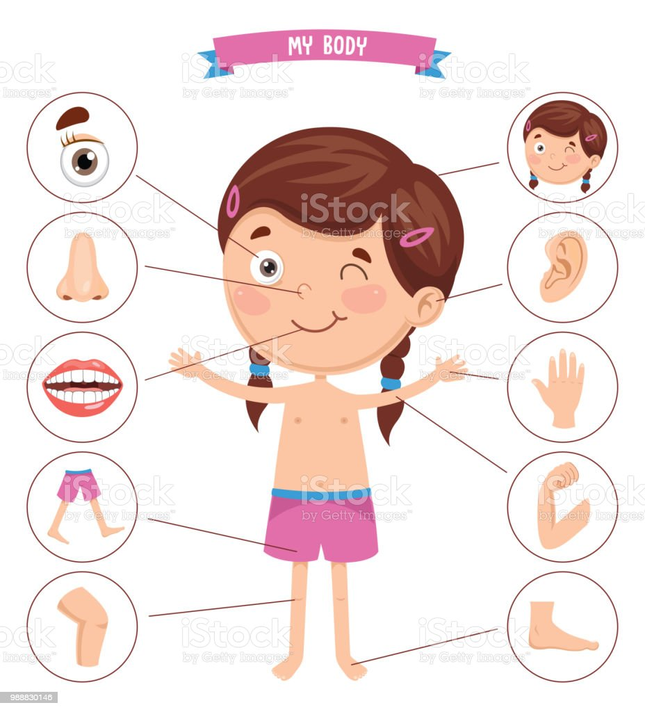 Vector Illustration Of Human Body vector art illustration