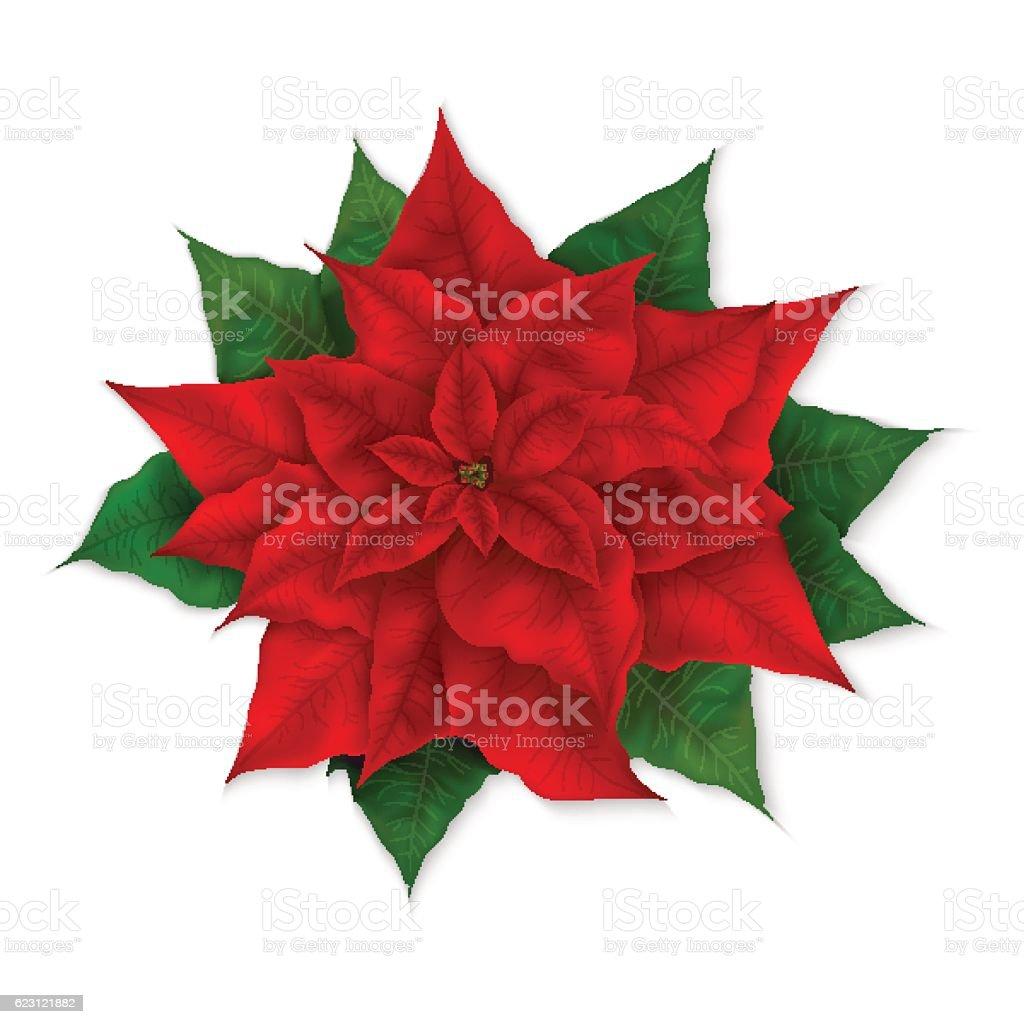 royalty free christmas star clip art vector images illustrations rh istockphoto com free christmas poinsettia clipart free poinsettia clip art images
