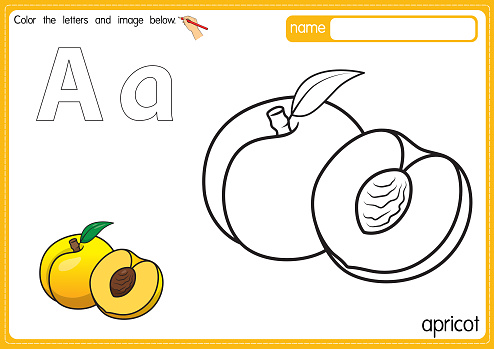 Vector illustration of kids alphabet coloring book page with outlined clip art to color. Letter A for Apricot.