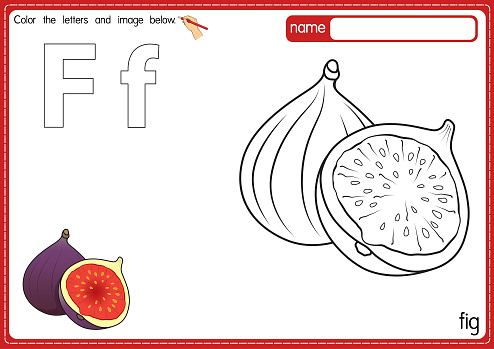 Vector illustration of kids alphabet coloring book page with outlined clip art to color. Letter F for Fig.