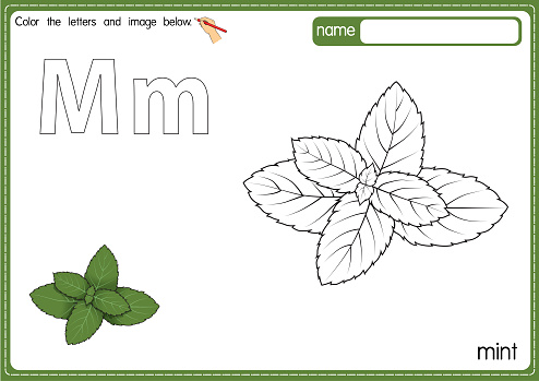 Vector illustration of kids alphabet coloring book page with outlined clip art to color. Letter M for  Mint.