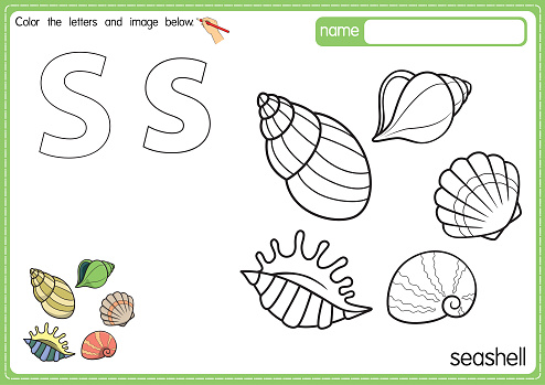 Vector illustration of kids alphabet coloring book page with outlined clip art to color. Letter S for Seashell.