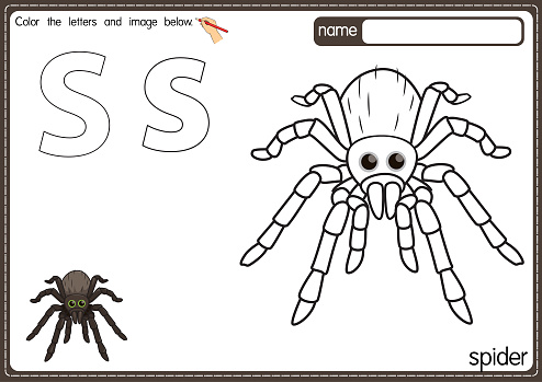 Vector illustration of kids alphabet coloring book page with outlined clip art to color. Letter S for Spider.