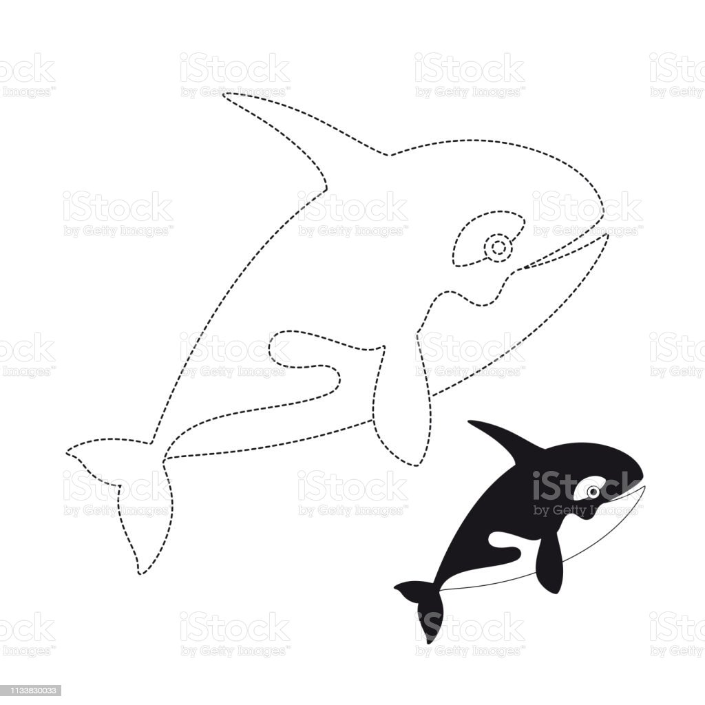 Vector Illustration Of Killer Whale For Coloring Book Stock