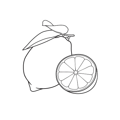 Vector illustration of lemon isolated on white background. Black and White for coloring. Organic vegetables and fruits cartoon concepts. Education and school material, kids coloring page, printable, activity, worksheet, flash card.