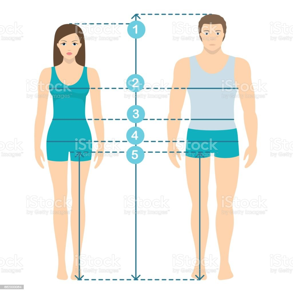 Vector illustration of man and women in full length with measurement lines of body parameters . Man and women sizes measurements. Human body measurements and proportions. vector art illustration