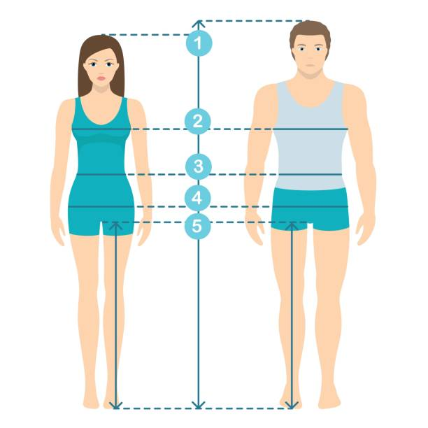 Vector illustration of man and women in full length with measurement lines of body parameters . Man and women sizes measurements. Human body measurements and proportions. Vector illustration of man and women in full length with measurement lines of body parameters . Man and women sizes measurements. Human body measurements and proportions. Flat design. female likeness stock illustrations