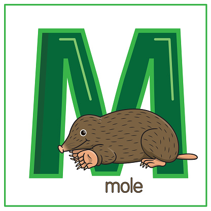 Vector illustration of Mole isolated on a white background. With the capital letter M for use as a teaching and learning media for children to recognize English letters Or for children to learn to write letters Used to learn at home and school.