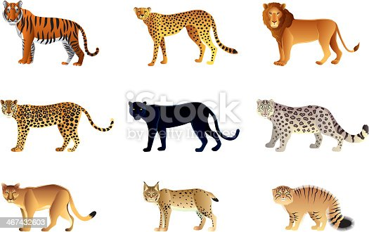 Popular big cats high detailed vector collection