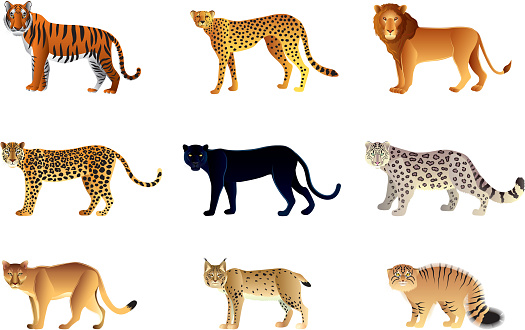 Vector illustration of nine large cats