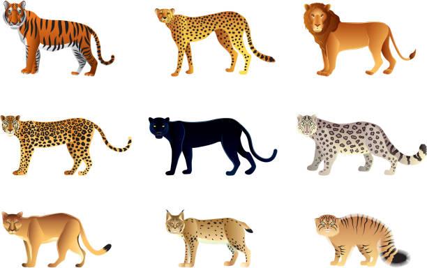 vector illustration of nine large cats - jaguar stock illustrations