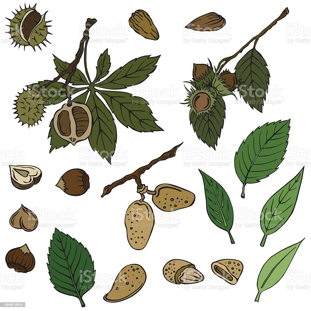 vector illustration of nuts vector art illustration
