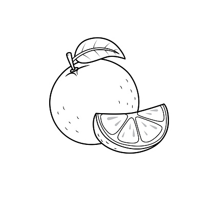 Vector illustration of orange isolated on white background. For kids coloring book.