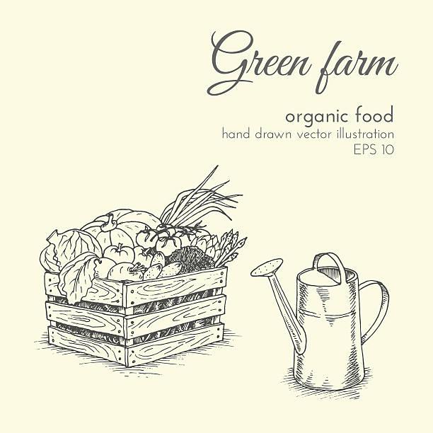 vector illustration of organic products. sketch farmer eco harvest vegetables vector art illustration