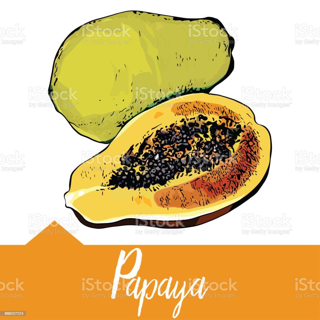 Vector illustration of papaya vector art illustration