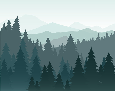 Vector illustration of pine forest and mountains vector background. Coniferous forest, fir silhouette and mountains in fog landscape. clipart