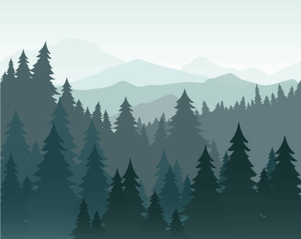 Vector illustration of pine forest and mountains vector background. Coniferous forest, fir silhouette and mountains in fog landscape. Vector illustration of pine forest and mountains vector background. Coniferous forest, fir silhouette and mountains in fog landscape woodland stock illustrations