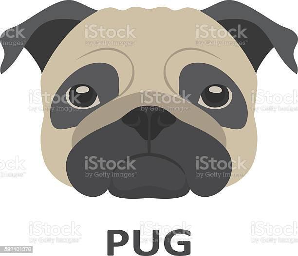 Vector illustration of pug in flat style vector id592401376?b=1&k=6&m=592401376&s=612x612&h=7aiibpdv0 smspyde6wmteadkml0dhex6yporfh6xgc=