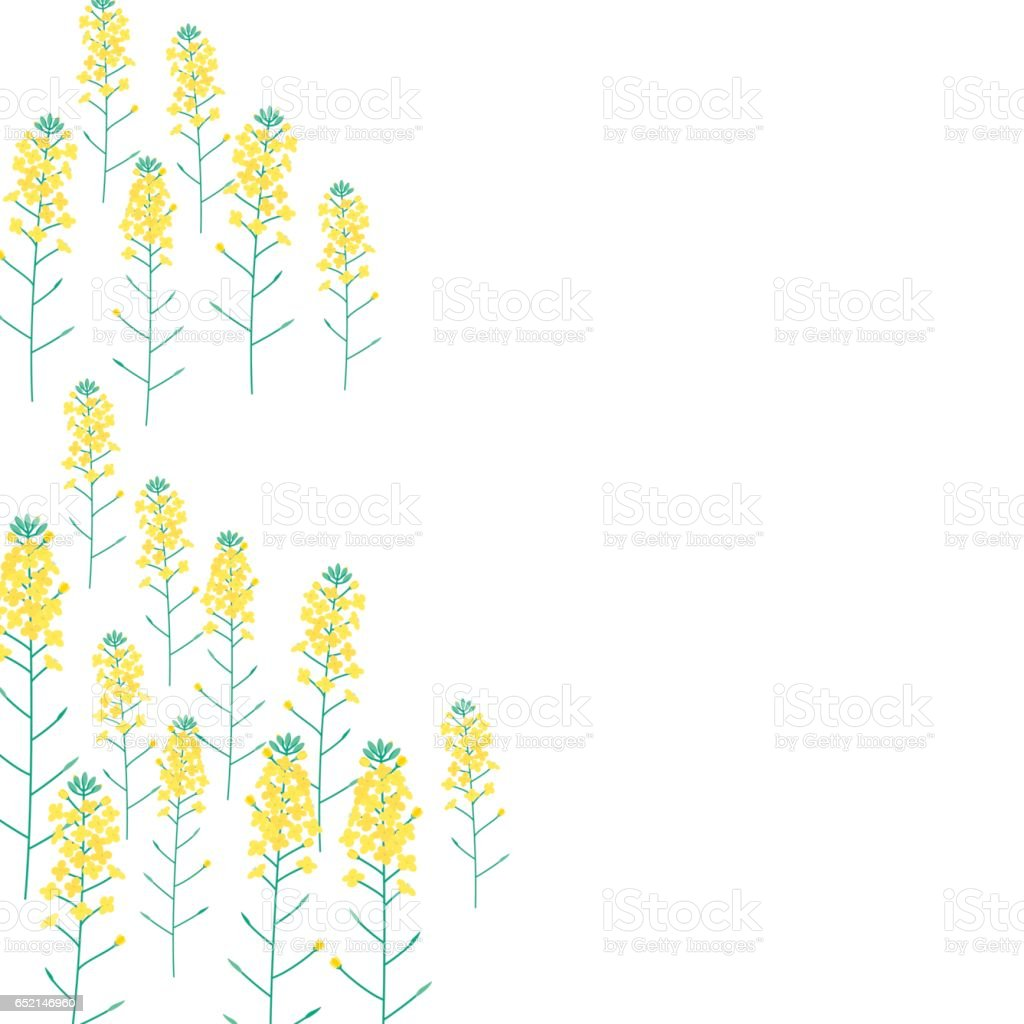 Vector illustration of Rape flower vector art illustration