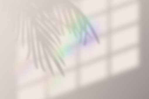 Vector illustration of realistic tropical shadow overlay effect. with rainbow lens flare. Blurred transparent soft light shadow from window and palm leaves