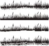 Vector illustration of reed, typha.