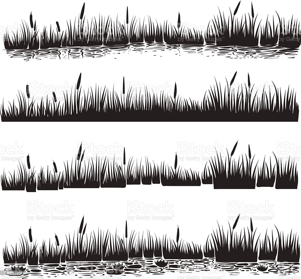 Vector illustration of reed, typha. vector art illustration