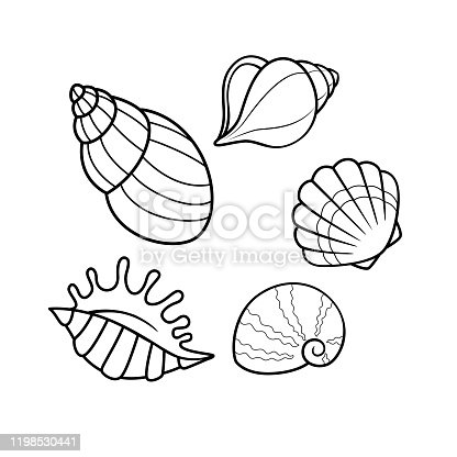 Vector illustration of seashell isolated on white background. For kids coloring book.
