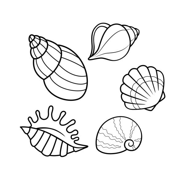 Vector illustration of seashell isolated on white background. For kids coloring book. Vector illustration of seashell isolated on white background. For kids coloring book. mollusk stock illustrations