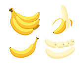 Set of cartoon illustration yellow bananas. Single, banana peel and bunches of fresh banana fruits