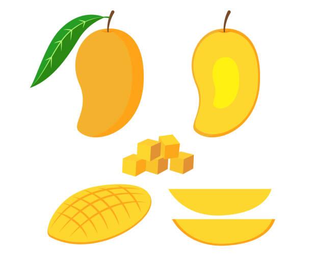 ilustraciones, imágenes clip art, dibujos animados e iconos de stock de ilustración vectorial del conjunto de mango fresco aislado sobre fondo blanco - mango