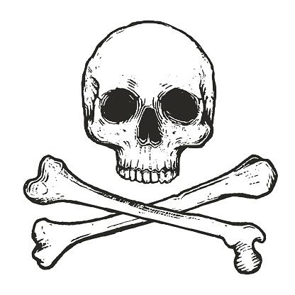 vector illustration of skull and crossbones