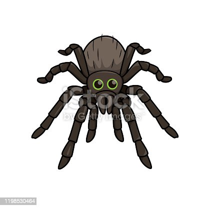 Vector illustration of spider isolated on white background.