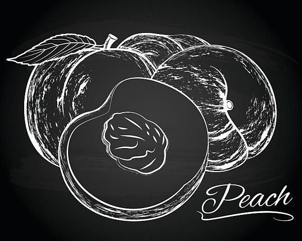 vektor-illustration leckere pfirsiche - nektarinenmarmelade stock-grafiken, -clipart, -cartoons und -symbole