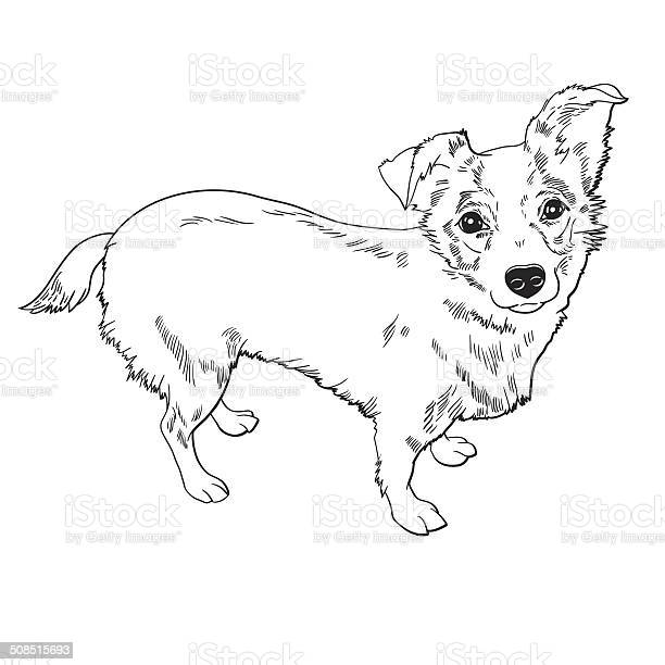 Vector illustration of the dog vector id508515693?b=1&k=6&m=508515693&s=612x612&h=lnvunhxacljs vhjtjoye8p9mc5kvxtpgwzkgbr03rq=