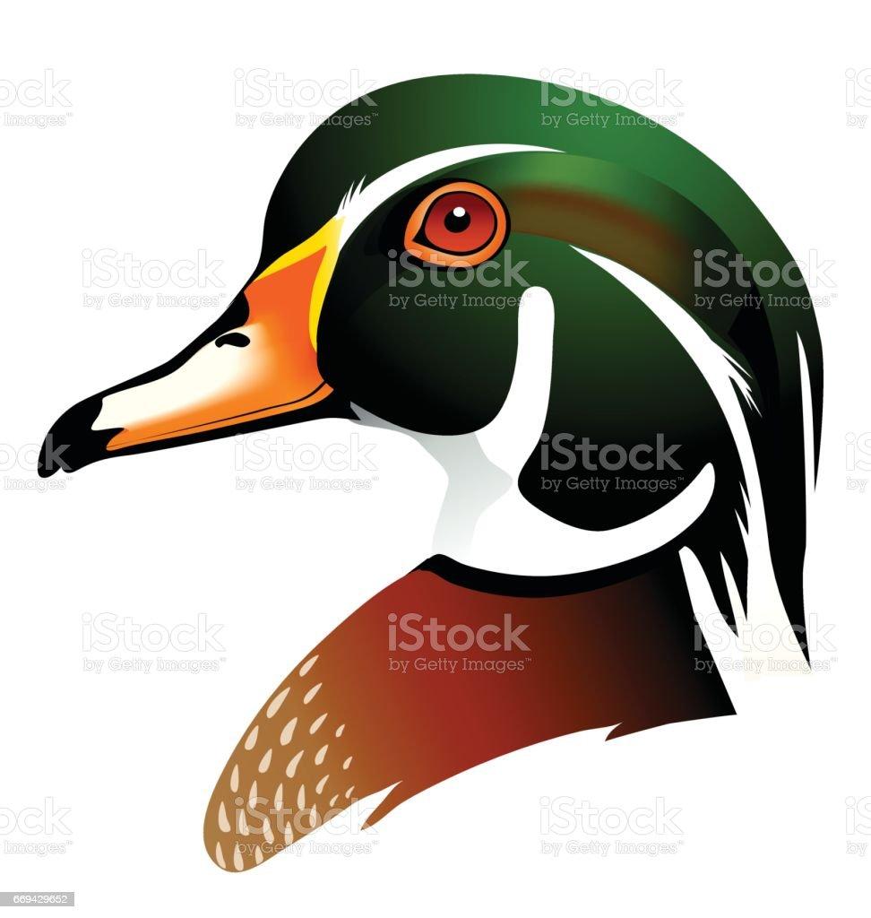 royalty free wood duck clip art vector images illustrations istock rh istockphoto com