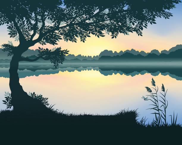 vector illustration of the lake - pond stock illustrations