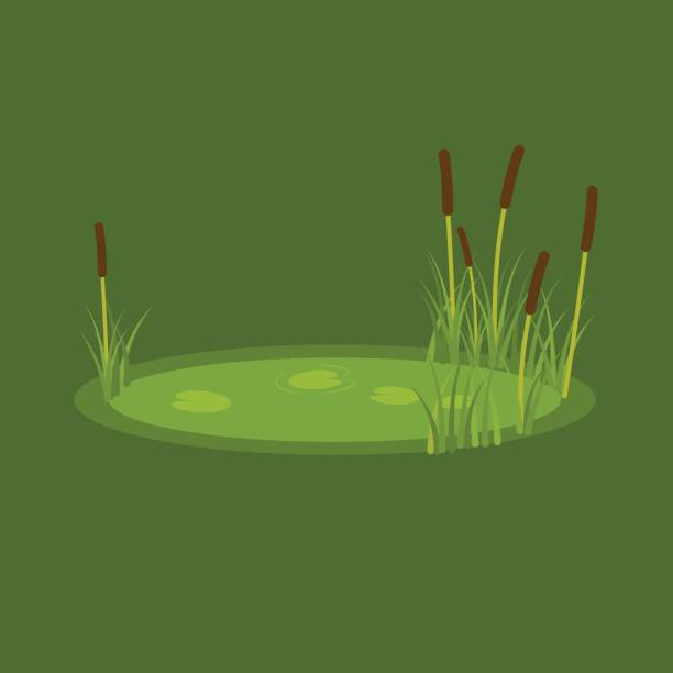 vector illustration of the marsh, reeds and water lilies on a green background - staw woda stojąca stock illustrations