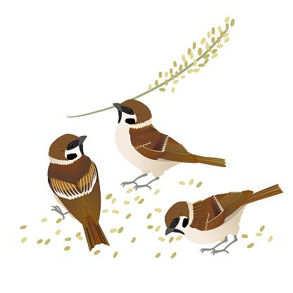 Vector illustration of three japanese swadlings eating rice