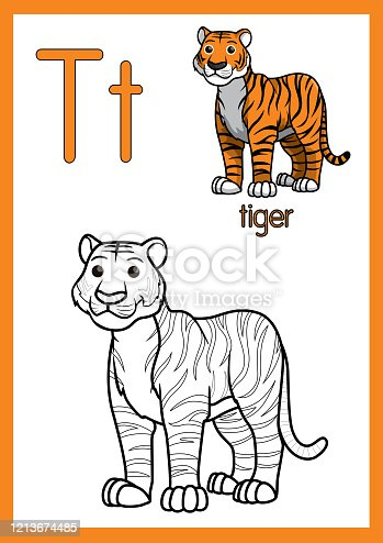 istock Vector illustration of Tiger with alphabet T for children learning practice ABC on A4 Paper size ready to print. 1213674485