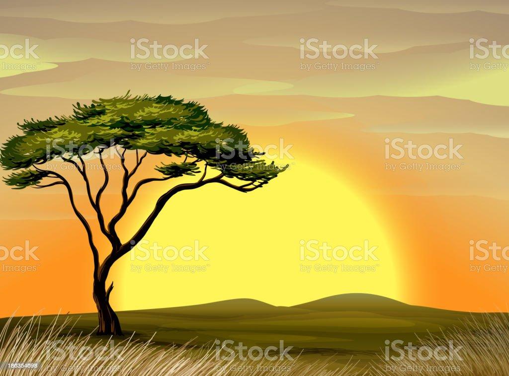 Vector illustration of tree in a desert at sunrise vector art illustration