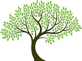 Simple vector illustration of a graphic tree.  The tree has a brown curved trunk with branches growing in a generally upward diagonal direction.  The tree trunk is largest at the base.  Five primary branches grow directly from the trunk.  Six secondary branches grow from three of the main branches. Seven twigs grow from secondary branches.  Each leaf is of similar size, shape and color.   Each leaf is elliptically shaped with pointed ends.  Many individual green leaves are placed among the branches and twigs, but do not touch the branches directly.  The background is white.