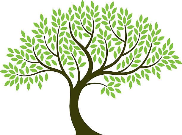 Vector illustration of tree on white background vector art illustration
